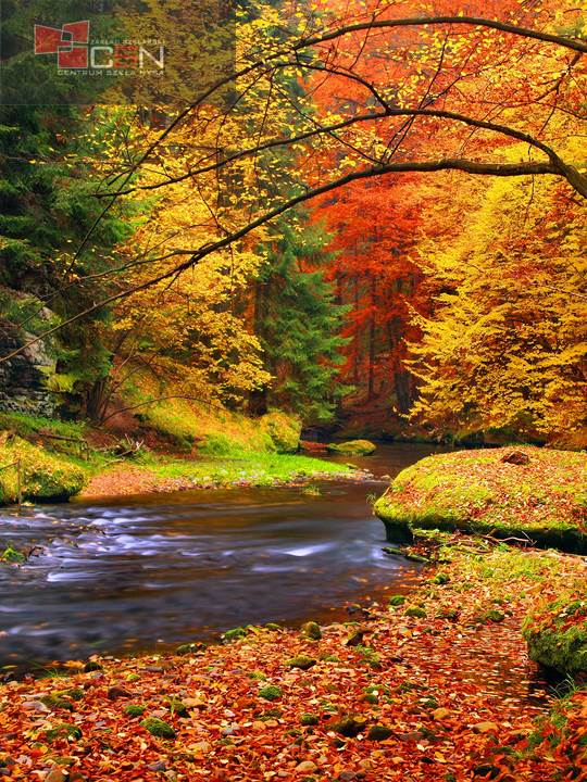 Autumn landscape, colorful leaves on trees, morning at river.