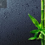 spa background - drops and bamboo on black