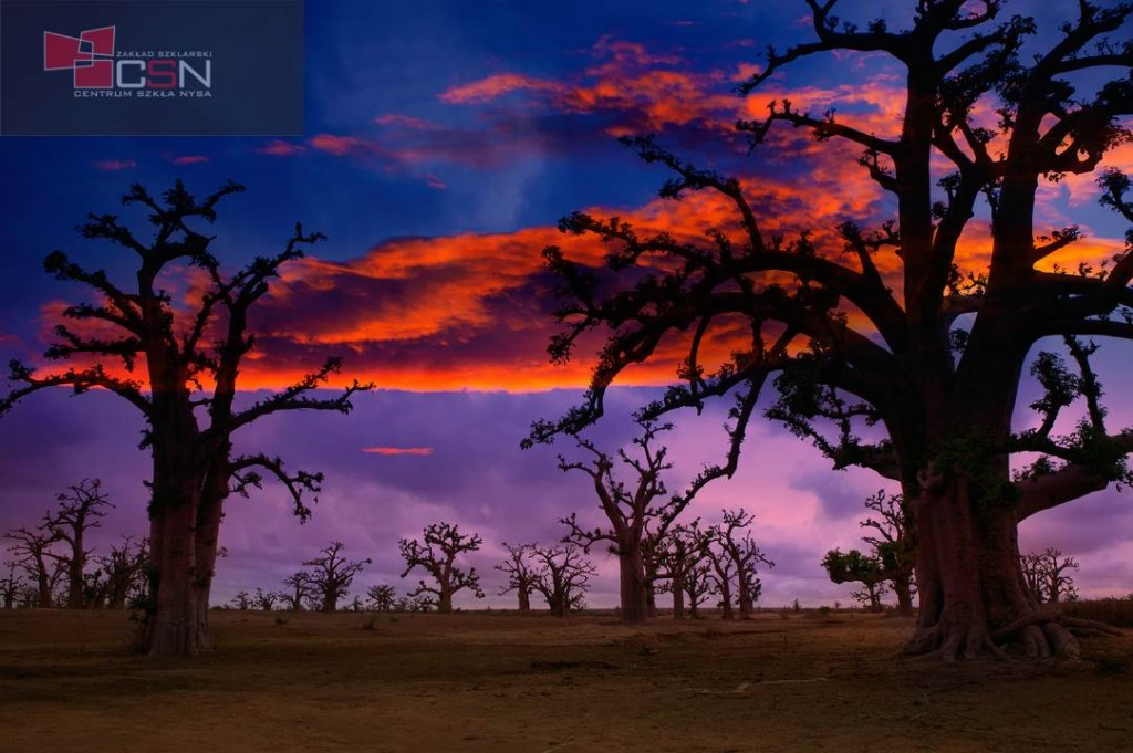 Africa sunset in Baobab trees colorful